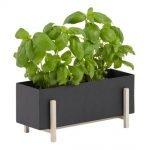 dhs-botanic-box